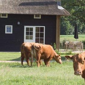 biologische boerderij Erve Woolderink